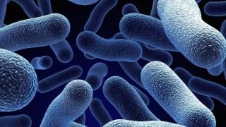 オフィスのあらゆる場所のバイ菌の数を比較してみた結果(画像有)