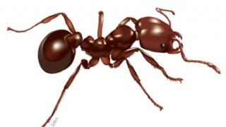 生物の本能「蟻のイカダ」大洪水を生き延びるため何千匹ものアリが集結して造られた筏の映像が話題