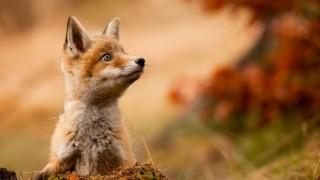 秋を感じる動物達でも見てほっこりしてって(´・ω・`) 画像100枚