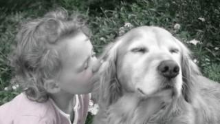 俺らの友達 愛犬が教えてくれる人生に大切な11のこと