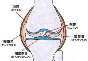 Content_Knowledge_Kenko_Knee_2
