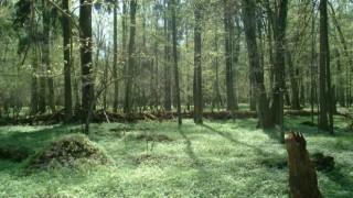 ポーランドの謎の森が話題に(画像有)