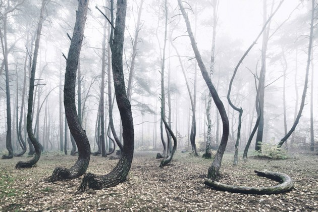 crooked-forest-krzywy-las-kilian-schonberger-poland-4