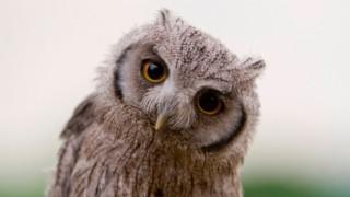 エサを探しているフクロウの1枚の写真が話題に(画像有)