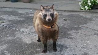 可愛らしいイヌのハロウィン仮装をご覧ください(画像)…犬のコスプレクオリティが高いと話題に