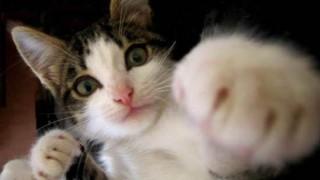 ネコパンチ動画あつめました…トラに大量のパンチを浴びせかける猫が話題に