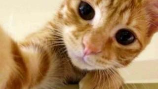 「おうちに入りたい!」ドアをノックする猫の動画