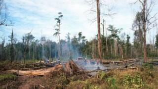 世界に森林がこれだけしかないって知ってた?