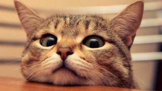 猫の舌をドアップにしてみたらモノ凄いことになってたwwwww