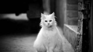 体の毛を半分剃られたネコの姿が話題に(画像)