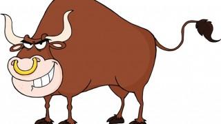 世界最強かもしれないマッチョ牛(画像)