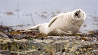 動物たちのお茶目な瞬間を集めたコンテスト写真…正月だしほっこり和む動物画像スレですお