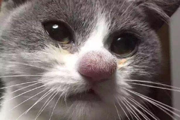 wpid-Cat.jpg
