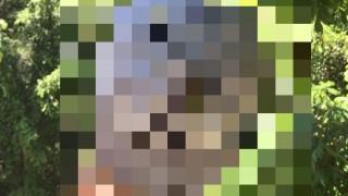 オーストラリア奥地で発見された人の頭サイズの巨大クモが怖キモイ( ̄▽ ̄;)