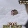 頭まで雪に埋もれたおばあちゃん報ステ奇跡の救出劇にヤラセ疑惑 こんなん笑うわw ※動画アリ※