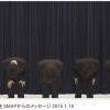 SMAP解散しない!スマスマ生放送で解散騒動について謝罪(動画) 2chリアルタイムな反応とネットの声…スマップメンバーの主な発言内容