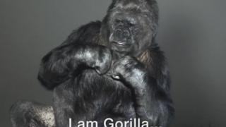 「地球を助けて下さい」ゴリラが手話で自然界からのメッセージを伝える動画が話題