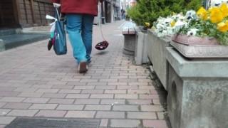 【動画】見えない透明犬を散歩させてるオバちゃん エアー犬の目撃情報が続々!
