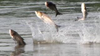 極寒の地で水から飛び跳ねたお魚クンの末路がヤバいwwwwwww