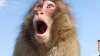 【画像】猿みたいな鳥が発見される / 中国