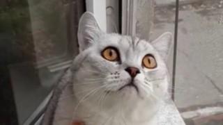 一点を見つめたまま固まるネコの動画が270万回再生 いったい何が見えているのか・・・・・・