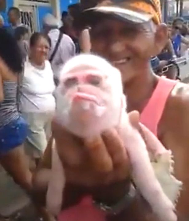 wpid-A-piglet-born-with-the-head-of-a-monkey-has-died-four-days-after-birth.jpg