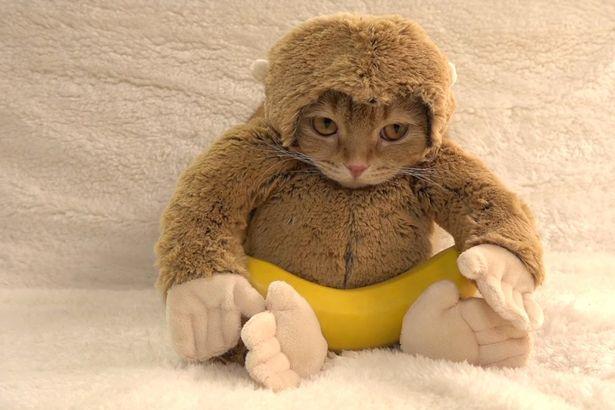 wpid-Cat-Monkey.jpg