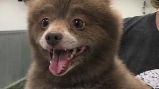 【画像】これは犬?それとも熊?