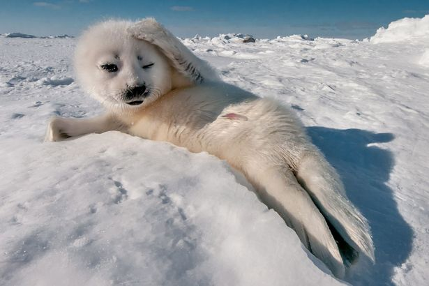 wpid-PAY-A-seal-poses-for-a-photograph.jpg