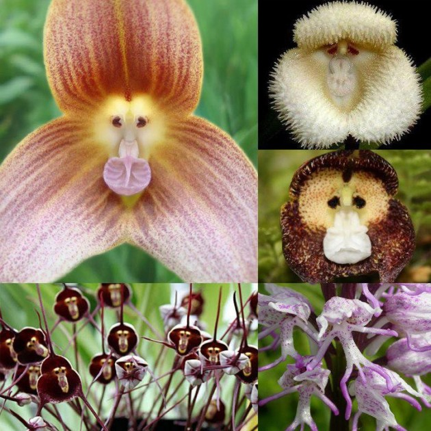 wpid-monkey-flowers.jpg