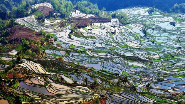 yunnan-rice-terraces22
