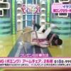 しょぼすぎるIKEAの椅子耐久テスト<動画>オードリー春日630万回のテストに合格したIKEAの椅子をぶっ壊す放送事故