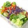 袋詰めサラダ(カット野菜)は食べないほうがいい!? 米で死者 大規模食中毒が発生