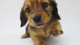 イヌが首つり公開処刑されるとこを救ったおっさんのファインプレー危機一髪GIF画像