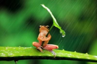 最強の傘が考案される…ついに「見えない傘」が誕生