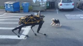 四足歩行ロボット VS 本物のイヌ ※動画※