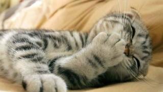 ネコのオモシロGIF画像みて和んでから寝よう<動画・GIF>猫の利き手を見分ける方法