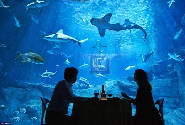 32A29F7700000578-3513560-The_guests_will_also_enjoy_a_meal_in_front_of_the_shark_tank-a-11_1459244318052
