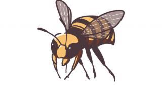 蜂だと思うだろ?これ蛾なんだぜ<画像>ハチに擬態した新種のガ 沖縄 国頭村で発見