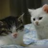 【ほのぼの】眠気に必死で抵抗する子ネコ動画
