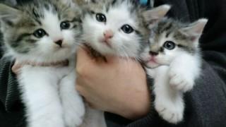 猫の里親になるための条件が厳しすぎるwwwww