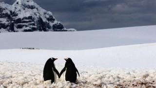 ペンギン「お、人間やんけ!襲ったろ!」 <画像50枚>ペンギン好きな奴あつまれ~