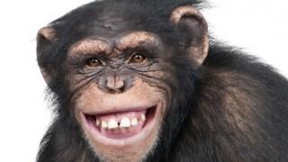 チンパンジーの戦闘力 怖すぎワロタwwwwwwwwwwww