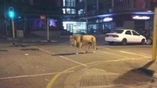 熊本地震のデマに注意 Twitterや2ちゃんで拡散されてる嘘の数々「川内原発で火災」「動物園からライオンが逃げ出す」など