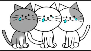去勢手術後に玉がない事に気づいた猫のリアクション<画像>くっそわろたwwwwwwww