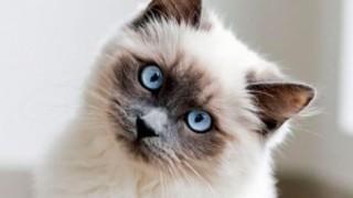 ひどい虐待による後遺症を負ったネコ ※画像※ 可愛いけどカワイソス(´・ω・`)