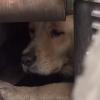 人間を恐れ怯える犬が愛情に触れて心を開いた結果<動画像>表情はっきり違うってわかんだね
