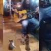 路上で歌ってたら猫が集まってくるほのぼの事態発生<動画>可愛いお客さんにねらーもニッコリ