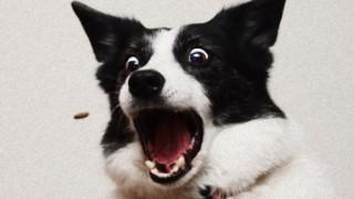 【悲報】イッヌ、ドローンに繋がれて飛んでく<GIF画像・動画> わ~ん(笑)