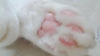 世界中のメディアが取り上げてる話題の日本の猫<動画像>バレエダンサー白猫のミルコくん
